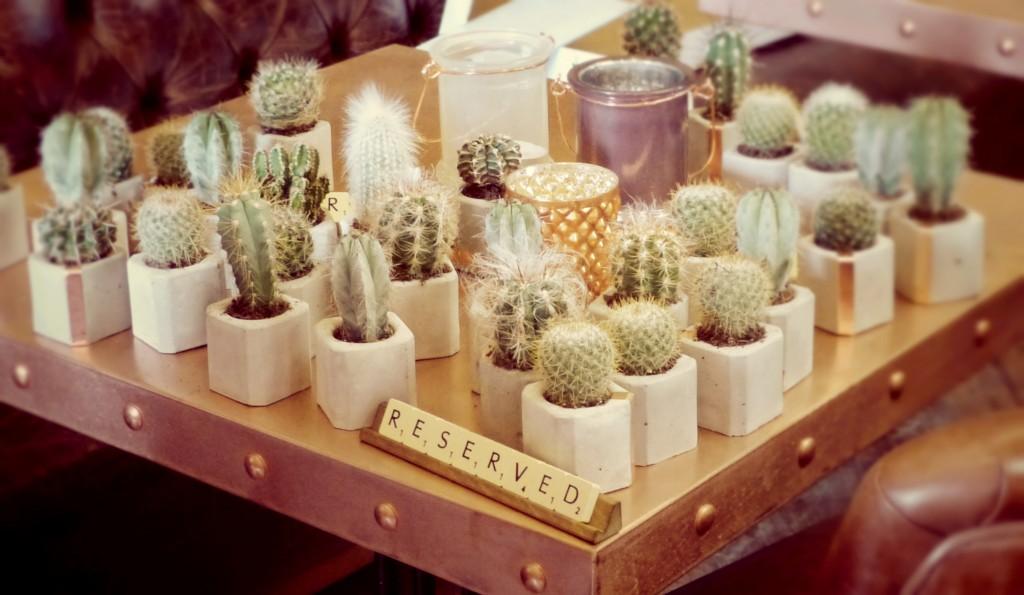 cacti_dawn